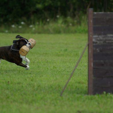 how to teach a dog off leash